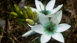 Ixia Photo Download