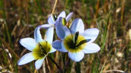 Ixia Wallpaper Download Free