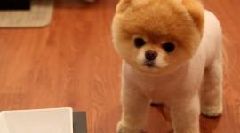 Micro Dogs Desktop Wallpaper HD
