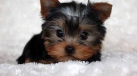 Micro Dogs Photo