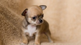 Micro Dogs Wallpaper