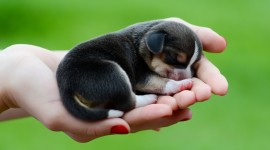 Micro Dogs Wallpaper For Desktop