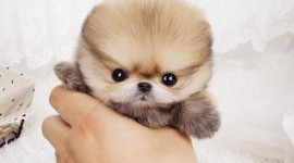 Micro Dogs Wallpaper For PC