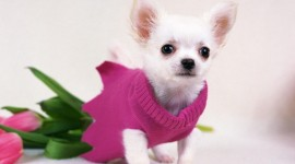 Micro Dogs Wallpaper Gallery