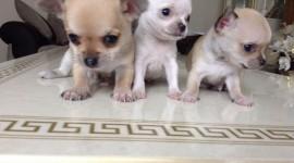 Micro Dogs Wallpaper HQ
