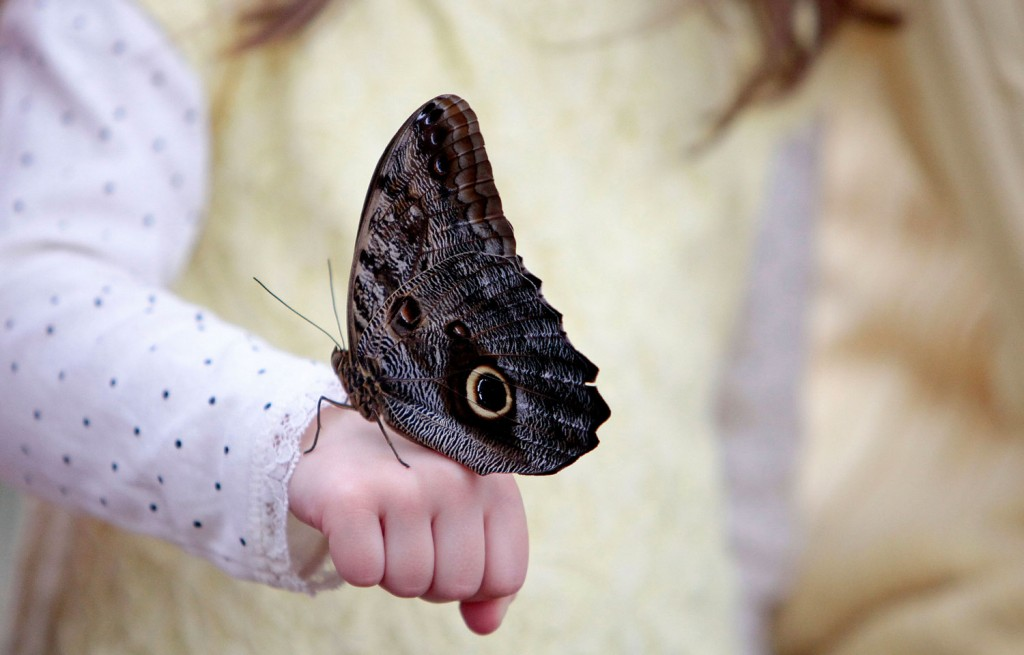 Owl Butterfly wallpapers HD