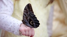 Owl Butterfly Best Wallpaper