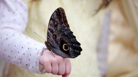 Owl Butterfly wallpapers high quality