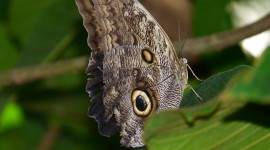 Owl Butterfly Desktop Wallpaper