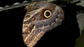 Owl Butterfly Photo Download