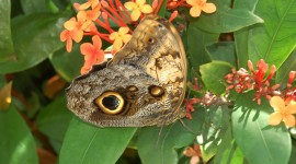 Owl Butterfly Photo Free