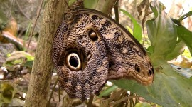 Owl Butterfly Wallpaper 1080p