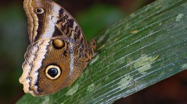 Owl Butterfly Wallpaper