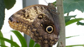 Owl Butterfly Wallpaper Download
