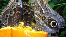 Owl Butterfly Wallpaper For Desktop