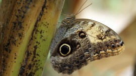 Owl Butterfly Wallpaper Free