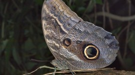 Owl Butterfly Wallpaper Gallery