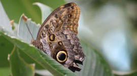 Owl Butterfly Wallpaper HQ