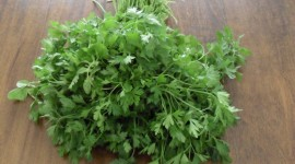 Parsley Wallpaper Download