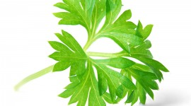 Parsley Wallpaper Full HD
