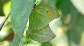 Pieridae Butterfly Photo