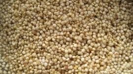 Quinoa Wallpaper 1080p