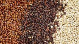 Quinoa Wallpaper Download Free