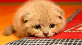 Sad Animals Desktop Wallpaper HD