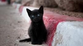 Sad Animals Photo Download