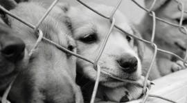 Sad Animals Photo Free