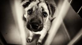Sad Animals Photo Free#2