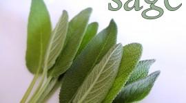 Sage Wallpaper 1080p