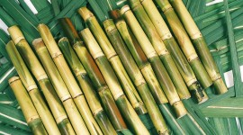 Sugarcane Desktop Wallpaper HD