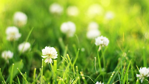 Summer Grass wallpapers high quality