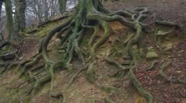 Tree Root Desktop Wallpaper
