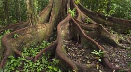 Tree Root Desktop Wallpaper For PC