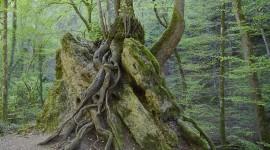 Tree Root Desktop Wallpaper Free