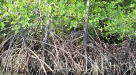 Tree Root Wallpaper 1080p