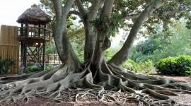 Tree Root Wallpaper Download