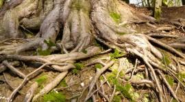 Tree Root Wallpaper For Desktop