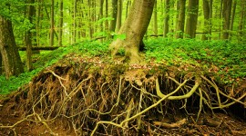 Tree Root Wallpaper For PC