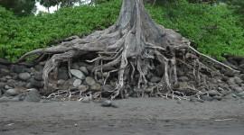 Tree Root Wallpaper Free