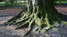 Tree Root Wallpaper Full HD
