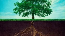 Tree Root Wallpaper Gallery