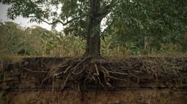Tree Root Wallpaper HD
