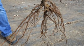 Tree Root Wallpaper High Definition