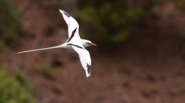 White Birds High Quality Wallpaper