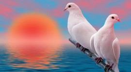 White Birds Wallpaper 1080p