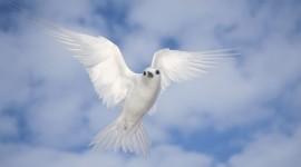 White Birds Wallpaper For PC