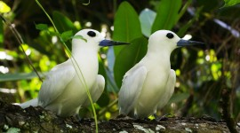 White Birds Wallpaper HD
